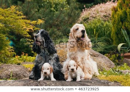 chien · blanche · vide · carton · noir · animaux - photo stock © eriklam