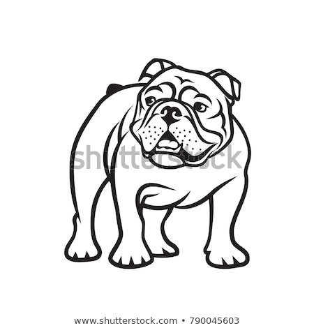Bulldog Mascot Body Vector Illustration stock photo © chromaco
