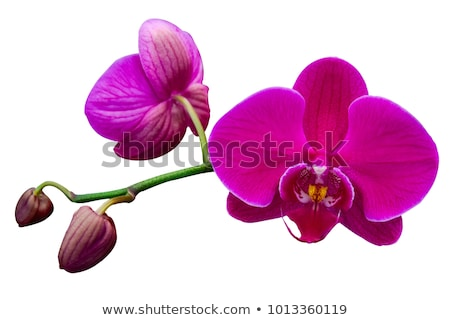 Púrpura orquídeas blanco espacio de la copia primavera naturaleza Foto stock © happydancing