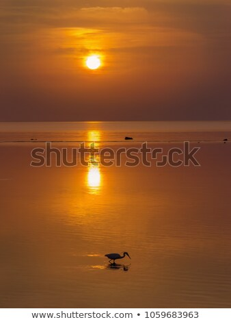 エジプト · 白 · 鳥 · 狩猟 · 魚 - ストックフォト © gant