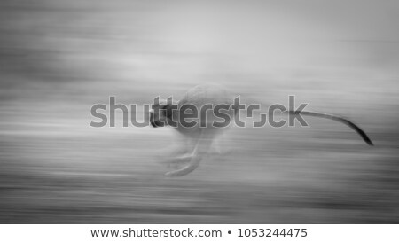 Stock photo: Running monkey slow motion