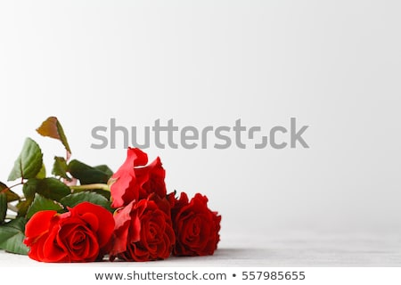 Hermosa corazón Rose Red pétalos papel en blanco blanco Foto stock © posterize