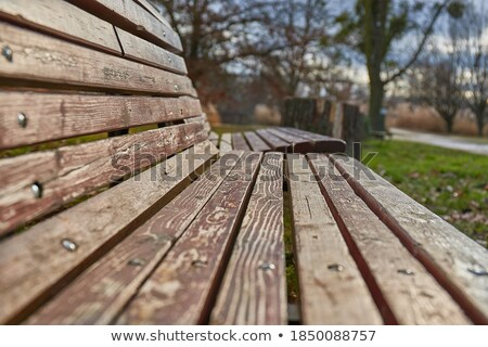 Emtpy Bench and tree in a park stock photo © pixelmemoirs