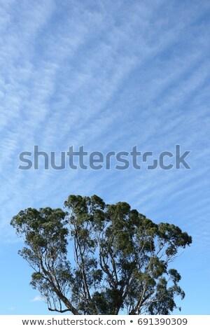 wolken · Blauw · winter · hemel · gom · bomen - stockfoto © byjenjen