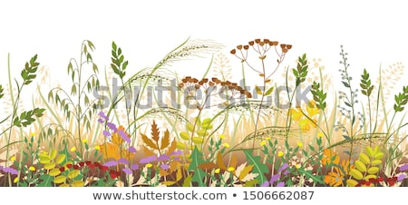 floral background  autumn flowers and soil stock photo © vavlt