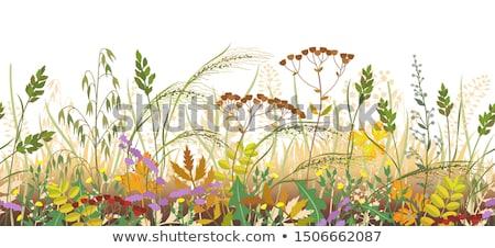 Virágmintás ősz virágok föld halom igazi Stock fotó © vavlt