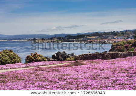 Pacific Grove View Stock photo © wolterk