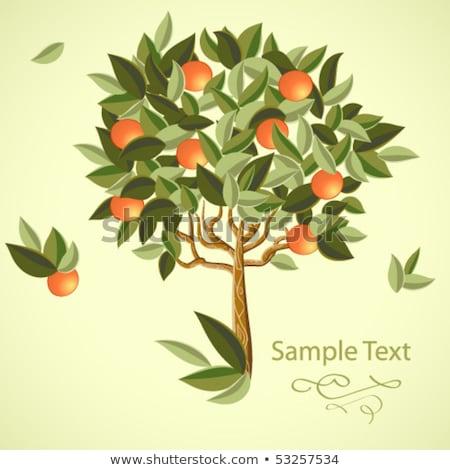 Narancsfa érett gyümölcsök elegáns égbolt absztrakt Stock fotó © ussr
