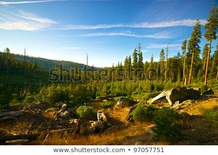 Beneden bos yosemite national park brand bomen dode Stockfoto © meinzahn