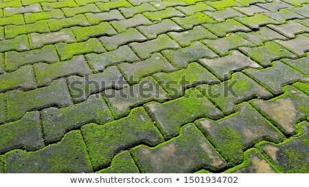 Pietra muschio piano foglie natura foglia Foto d'archivio © scenery1