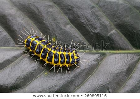 lagarta · natureza · fundo · laranja · cor · planta - foto stock © juniart
