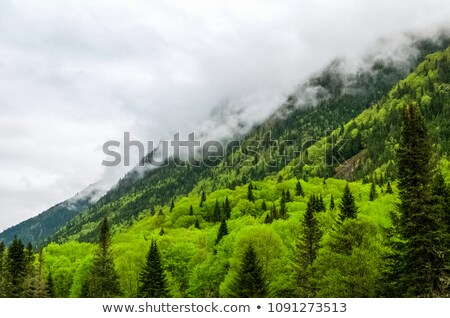 Overcast sky over mountain, Quebec, Canada Stock photo © bmonteny