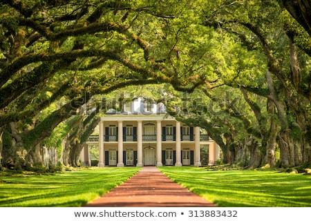 Eiken steegje detail mooie South Carolina boom Stockfoto © meinzahn