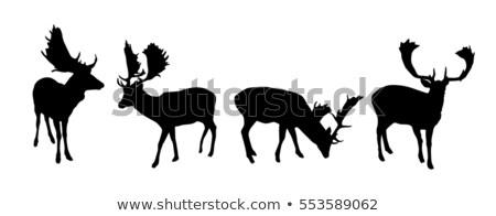 Fallow Deer Antliers Stock photo © rghenry