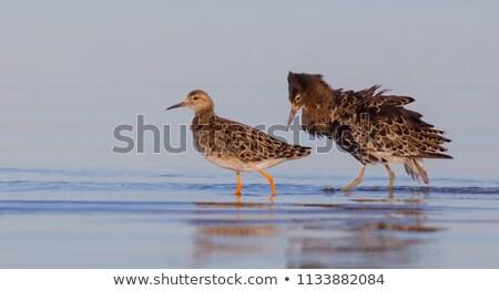 pássaro · campo · grama · natureza · animal - foto stock © chris2766