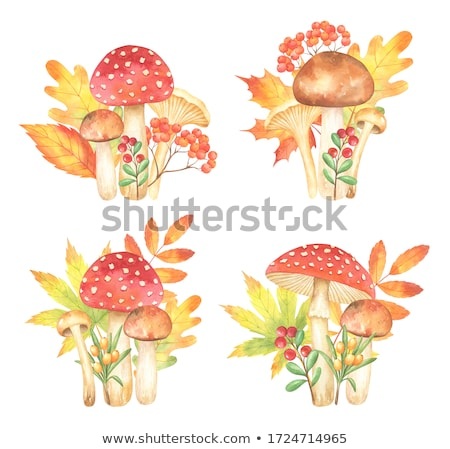 Fly amanita mushroom with autumn leaves Stock photo © Mps197