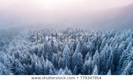 Stock fotó: Első · hó · erdő · hegyek · fa · fa