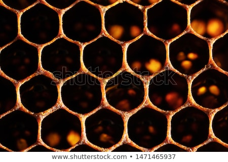Honeycomb cells closeup from beehive Stock photo © jordanrusev