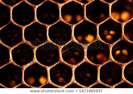 a · nido · d'ape · polline · propoli · fiore · natura · miele - foto d'archivio © jordanrusev