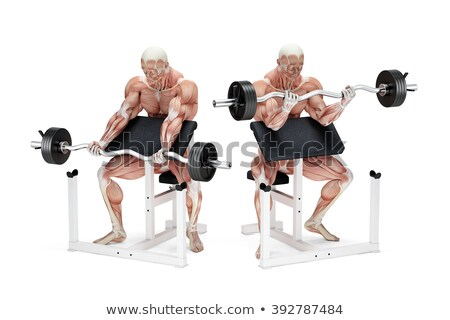 Preacher curl biceps exercise. Anatomical illustration. Isolated. Clipping path Stock photo © Kirill_M