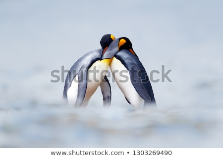 Pár szeretet illusztráció esküvő jég tél Stock fotó © adrenalina