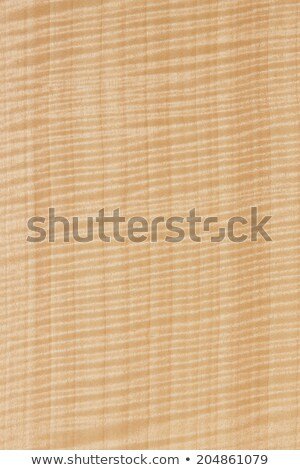 Sycamore Wood Grain Stock photo © marilyna