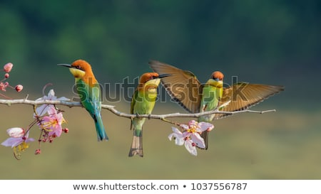 Three colourful birds Stock photo © bluering