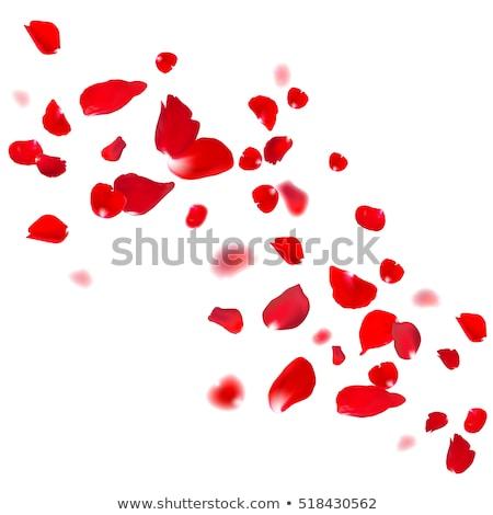 liefde · hart · kersenbloesem · roze · ontwerp · bloem - stockfoto © beholdereye