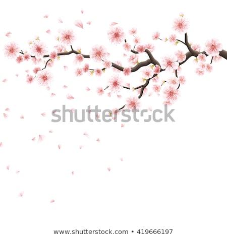 dekoratív · cseresznye · fa · virágok · bogyók · pillangók - stock fotó © beholdereye