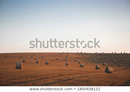 straw roll bale on the farmland with the clear blue sky stock photo © tuulijumala