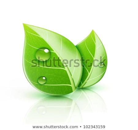 緑色の葉 生態学 アイコン 水 春 ストックフォト © oblachko