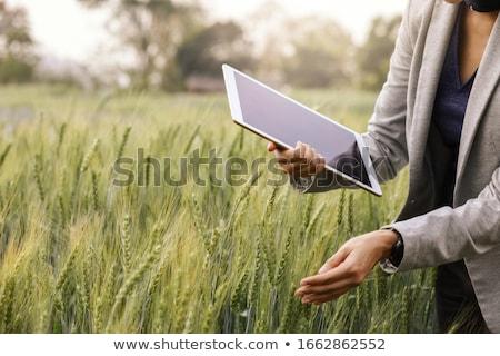 Foto d'archivio: Femminile · agricoltore · digitale · verde · campo · di · grano