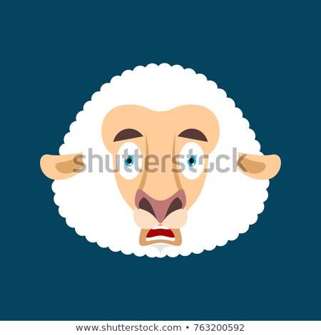 Baran omg owiec mój boga przestraszony Zdjęcia stock © popaukropa
