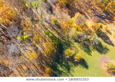 Aerial view of bare deciduous forest trees in autumn Stock photo © stevanovicigor