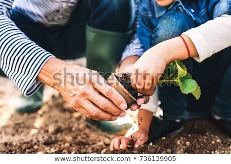 Kıdemli kız bahçıvan hasat örnek yaşlı Stok fotoğraf © lenm