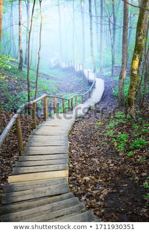 árvores névoa luz solar estrada luz fundo Foto stock © Pozn