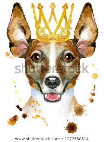 Watercolor portrait of jack russell terrier with golden crown Stock photo © Natalia_1947