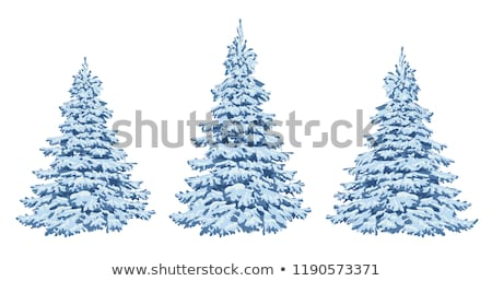 White Frozen Fir Twig Transparent Stock photo © limbi007
