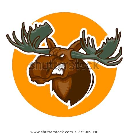 Angry Moose Head Mascot Stock photo © patrimonio