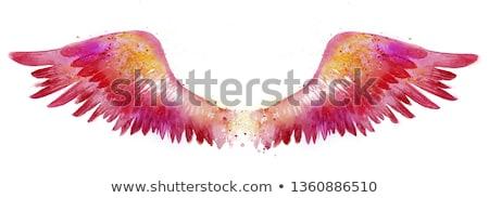 anioł · kobieta · dove · dziewczyna · moda · świetle - zdjęcia stock © colematt