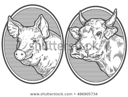 Agriculteur vache porcelet domestique bovins faible Photo stock © robuart