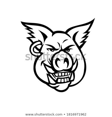 Rose porc boucle mascotte icône Photo stock © patrimonio