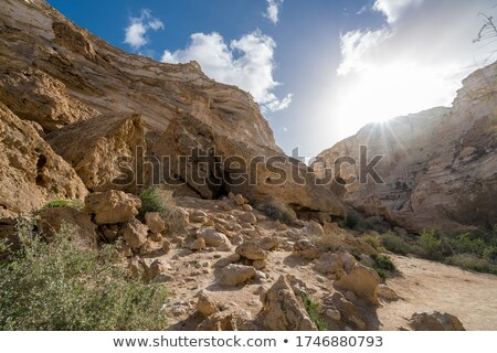 View from Oasis on Negev Desert Stock photo © dariazu