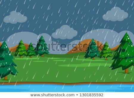 Esik az eső jelenet természet illusztráció textúra fa Stock fotó © colematt