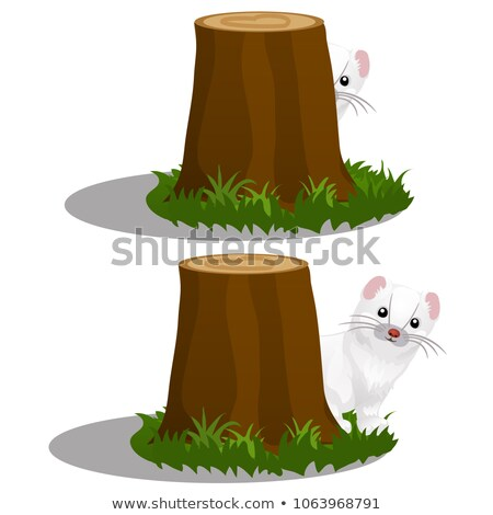 Old stump in the forest and Least Weasel or Mustela nivalis isolated on white background. Vector car Stock photo © Lady-Luck