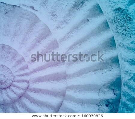 nautilus, colorful abstract background Stock photo © Artida