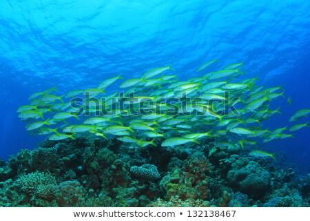 Korall Vörös-tenger víz hal természet tájkép Stock fotó © stephankerkhofs