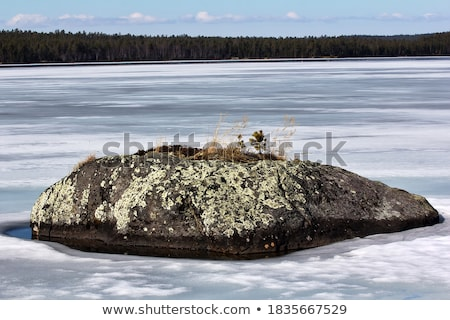Natural stone with patches of lichen Stock photo © pzaxe