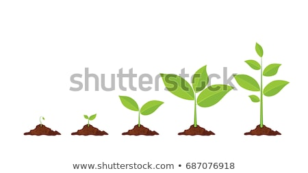 Sequence green sprout growing  Stock photo © nalinratphi