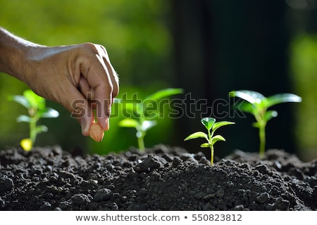 Prepare watering plant in the garden Stock photo © nalinratphi